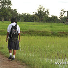 Thumbnail_thai_girl_rice_paddy