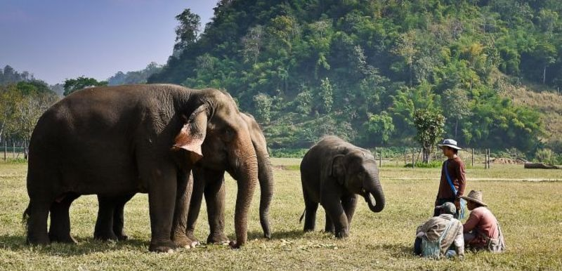 Home_slideshow_elephant_nature_park